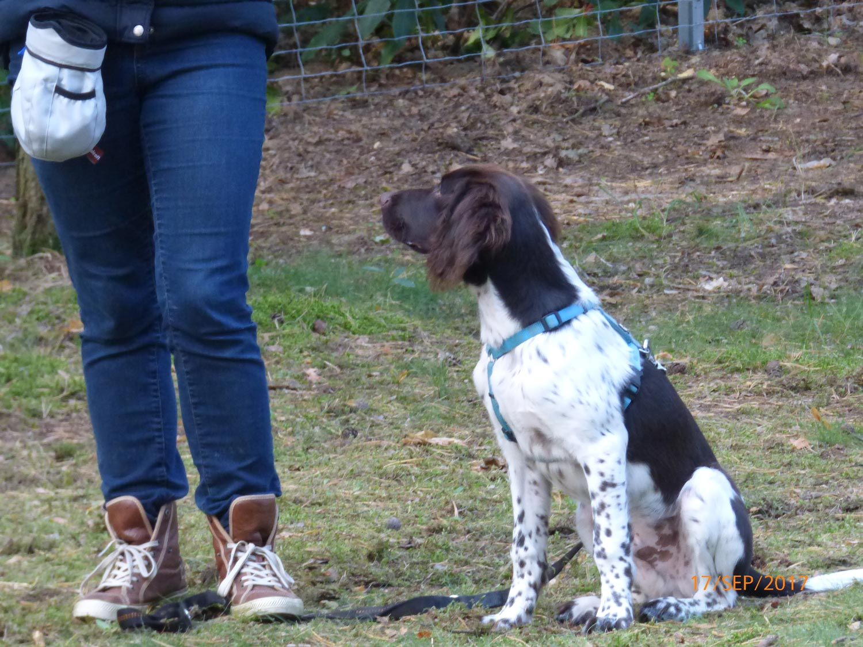 Hundetraining mit Sabine Wolf